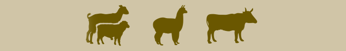 Tiere Pictogramme_3